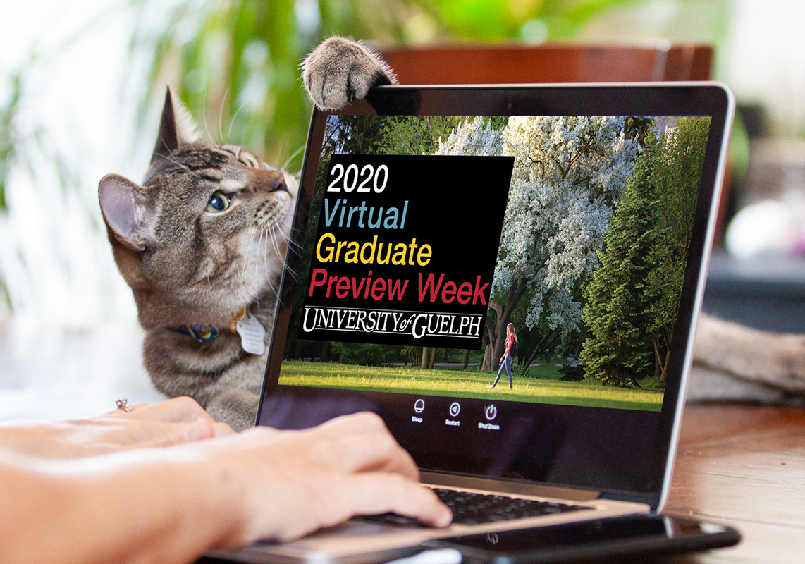 Cat watching a laptop with Grad Preview Week on the monitor