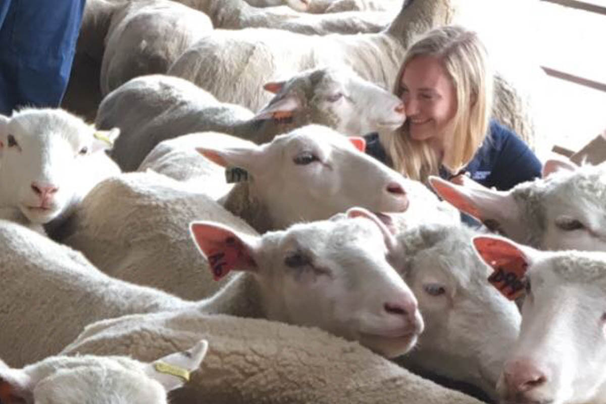 Female student nuzzling sheep in a pen