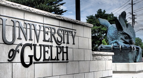Outdoor shot of the University of Guelph sign with the Guelph gryphon statue